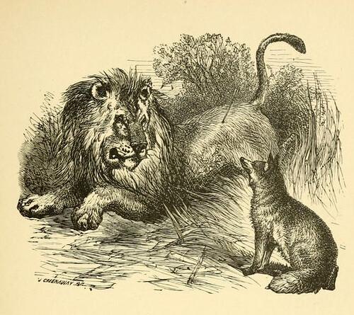 Sagittarius, Leo et Vulpes