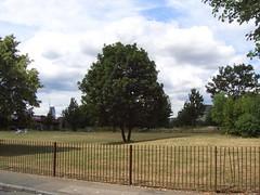 peckham_burgess_park