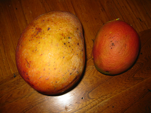 Homegrown and Commercial Mangoes