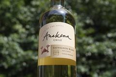 2008 Anakena Sauvignon Blanc