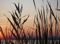 (patricia.mg) Tags: sunset atardecer explore siluetas