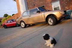Pepe approves of my choice in automobiles. (Powar) Tags: dog tongue puppy shih tzu shihtzu 99 mazda miata saab mx5 roadster eunos