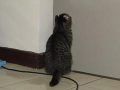 OHYES (ddsnet) Tags: cats cat sony cybershot neko     hx1 ohyes