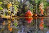 Friends Lake (Ronaldo F Cabuhat) Tags: travel autumn trees vacation reflection fall nature forest canon photography friendslake autumninnewyork canonefs1755mmf28isusm canoneos50d canoneosdigitalrebelxti cabuhat chestertownny
