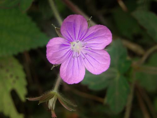 Flower-064-02