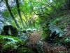 Sentiero per Valle Uma - Matese Orientale - Campochiaro - Molise (Marioleona) Tags: italy landscape paisaje paisagem paesaggio landschap matese molise appennini sanniti sannio mariobrindisi cainapoli
