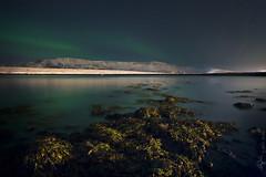 361470449_6847b868ed_o (Mill Master) Tags: longexposure landscape lights iceland horizon pad wideangle northern reykjavík northernlights auroraborealis scapes 2007 nothernlights dalla geldinganes nightimage mountesja 17365 reykjavk salbjorgritajonsdottir auroraboreales