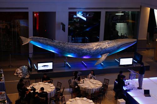 Big Blue Whale 3