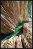 Convergence of Lines - Parco delle Gole della Breggia - Ticino - Switzerland (nonac.eos@gmail.com) Tags: lines switzerland ticino time line burning timeline timelines hdr highdynamicrange hdri valledimuggio breggia dodging photomatix efs1022 tonemapping highdynamicrangeimaging naturalhdr 450d realistichdr realhdr besthdr photomerging truehdr parcodellegoledellabreggia morbioinferiore naturallookinghdr landscapesshotinportraitformat nonaceos theartoftruetonemapping manualtonemappingphotomatixlocal localcontrastincrement