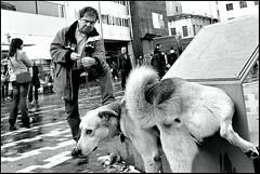 sʇoɥs ʇǝǝɹʇS (Costas Lycavittos) Tags: street people blackandwhite bw nikon ditch streetphotography athens keep d300 monastiraki keep2 keep3 keep4 keep5 keep6 keep7 keep8 keep9 keep10 keep11 keep12 keep13 keep14 keep15 ditch2 costaslycavittos nikkor20mmaisf35manual
