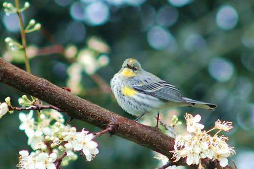 bird1 campolo