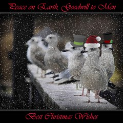 Merry Christmas to All (Don Iannone) Tags: christmas snow interestingness nikon lakeerie clevelandohio explore funnyhats lakegulls christmasimage doniannone holidayimage doniannonephotography nikond2xcamera visualadvantagephotography