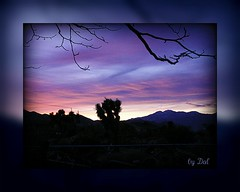 **desert blues (dagutzyone ) Tags: california sunset sky nature joshuatree highdesert mojavedesert yuccavalley morongobasin dagutzyone mygearandmepremium mygearandmebronze mygearandmesilver mygearandmegold