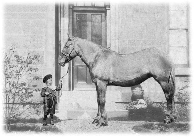 Wee Horace,1900s