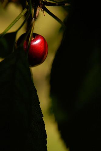 Cherriesb070209