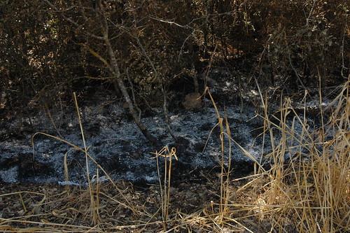 incendi 20090717