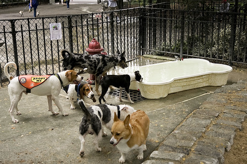 Tompkins Square dog run