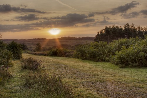 New Forest at sunrise picture by Flickr user davidgsteadman