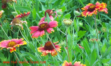 Austin Attractions - Lady Bird Wildflower Center - Austin Texas