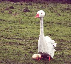 (Rebecca L Hunter) Tags: festival fairytale golden village scarecrow goose legends eggs tradition legend myth fairytales myths goldeneggs norland norlandscarecrows norlandscarecrowfestival mythslegendsandfairytales