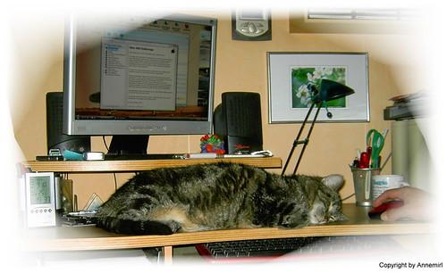 Mein Schreibtischwächter