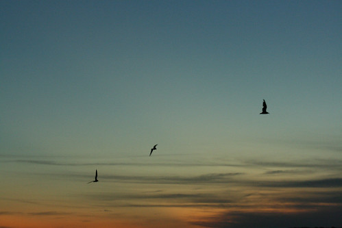Messengers of the Sunset - IMG_4002