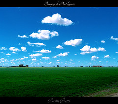 Campo de Trigo (DiEgo bErrA) Tags: sky verde green field day wheat dia cielo campo cosecha trigo reaps