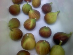 Finally ripe!!! (Dan.Tam.Al) Tags: new tree fruit fig ficus crop jersey figs ripe frutti fico fichi