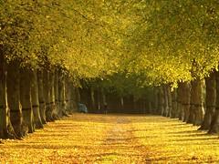 Lime Light (DaveKav) Tags: uk greatbritain autumn trees england leaves bravo unitedkingdom britain wheels olympus gb lime avenue nationaltrust nottinghamshire e510 fourthirds limetreeavenue bassetlaw lpwheels