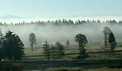 foggy morning (artistgal) Tags: morning trees mist fog tag3 taggedout landscape tag2 tag1 friendlychallenges herowinner pregamewinner