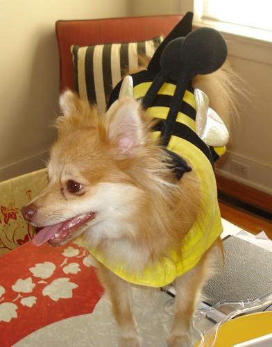 mylittlebee