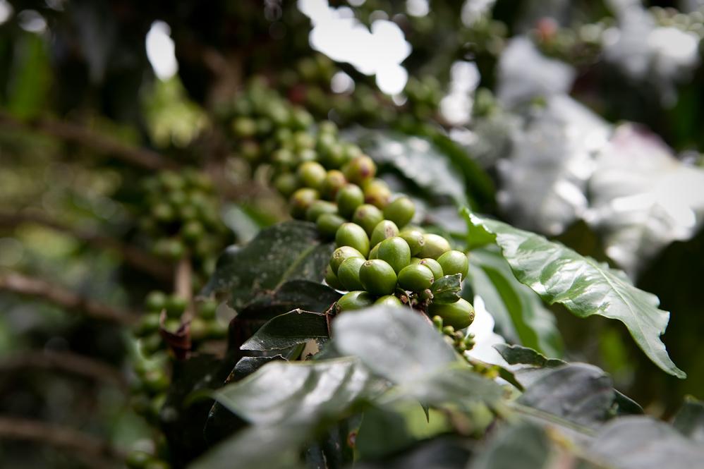 4075774601 506674af8e o El mejor café del mundo