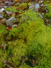 Mossy Seed Bed