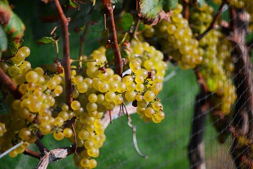 long island winery