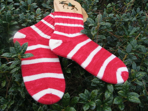 Socks on Holly...