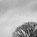 Glastonbury Treetop