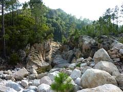 Le ruisseau du Finicione en amont du pont IGN300 : sentier, quel sentier ?