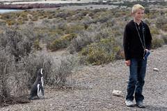 baudchon-baluchon-pinguins-3