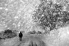 In this windy storm (Donato Buccella / sibemolle) Tags: street winter blackandwhite bw snow storm walking landscape flash country windy explore campagna inverno frontpage freddo canon400d sibemolle 14mm28canon strobistaiquattroformaggistrobist