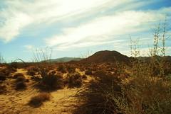 Desert Scene1