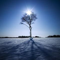 [フリー画像] [自然風景] [樹木の風景] [雪景色] [青色/ブルー]       [フリー素材]