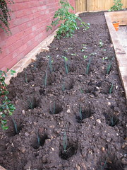 Leeks in the new raised bed