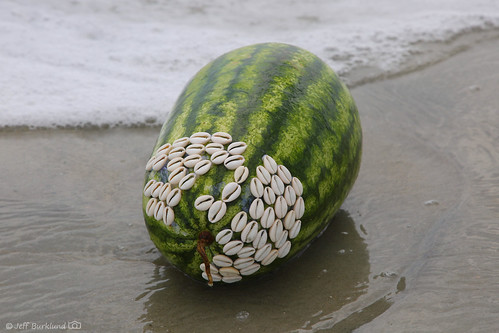Unusual Melon