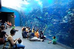 Tropical Divers