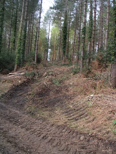 forestry-commission-ampfield