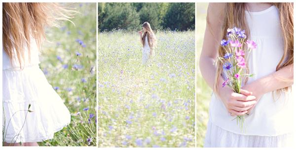 Cornflower Field