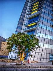 BWTC tree HDR