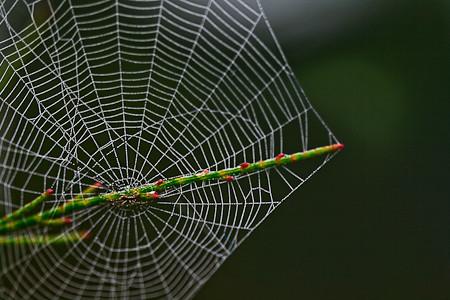 Cobweb Macro