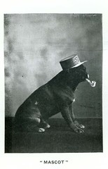 Mascot, Butte Fire Department (1901) (Butte-Silver Bow Public Library) Tags: bw dog hat montana butte pipe mascot pamphlet silverbow 1901 butteamerica firehousedog 19001909 buttefiredepartment buttesilverbowpubliclibrary buttepubliclibrary bsblibrary buttedigitalimageproject petersanger wwwbuttepubliclibraryinfo peoplespubco