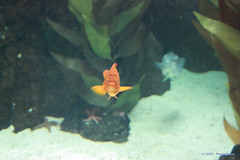 Ol Peixe / Hello Fish (Nuno-Gomes) Tags: life light sea water aquarium interesting underwater lisboa lisbon colored cave oceanarium oceanario nunogomes oceanriodelisboa platinumpeaceaward mygearandmepremium mygearandmebronze mygearandmesilver mygearandmegold mygearandmeplatinum mygearandmediamond ngomes